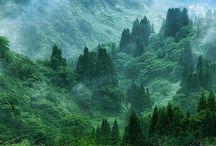 Příroda