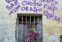 Borgo in fiore / Istantanee fiorite delle vie di Borgo Dora