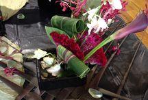 Melbourne flower show ideas
