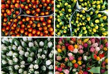 flowers | flower market / My favourite place: the flower market