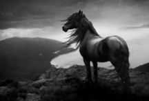Wild Horses! / Even though I have loved riding horses. I love the wild ones even more...