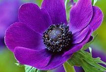 flowers / by Doreen Llerena