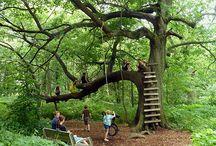Nature Pedagogy
