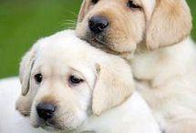 psikovia a šteniatka