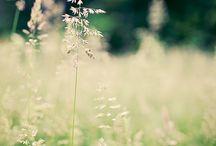 tráva,obilí
