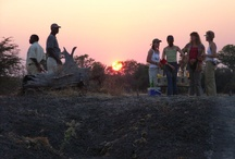 Family Safaris / Taking your family on safari is a unique and unforgettable experience that brings families closer together and enables you to enjoy the unspoilt Zambian bush with your loved ones.