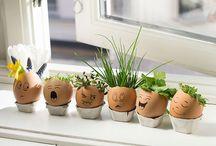 roslinki w jajkach