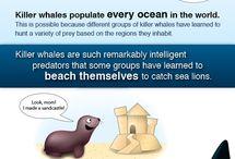 marine biology ♥