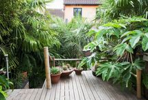Exotic gardens for cool climates