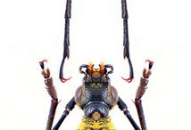 Insect Inspiration