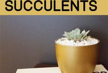 Garden: succulents - in containers