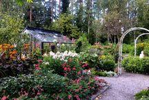 Our autumnal garden 2016