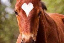 konie horses
