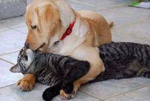 zvířata / psi a kočky