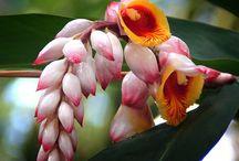 Blommor  Flower