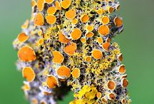 Lovely Lichens