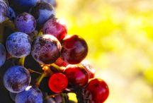 Wine - Northwest Style Spokane, WA / Local Washington Wines We Love - Spokane, WA