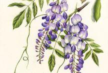 botanic print