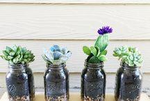 DIY rastliny