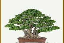 Penjing and bonsai inspiration
