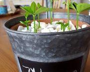 Ideen mit Pflanzen