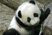 Cute animals make me cry