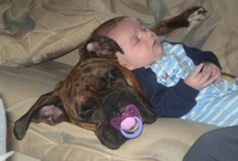 babies and doggies / by Sue Kittle