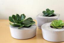 Plants / indoor-outdoor