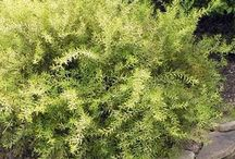 Trevin C. Plants