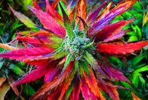 <3 Herbs
