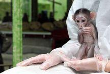 primates I am fond of