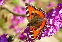 Variopinte come... / La magia di variopinte farfalle che volano come coriandoli impazziti, mentre le emozioni diventano amabilmente palpabili…  #romanzo #Chiarottino #farfalle #amore