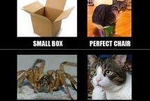 Cats <3 / by danielle loper