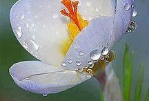 Flores / É sobre as flores mais lindas do mundo