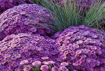 Garden - Color Combinations / by Grace Hensley @ eTilth