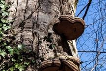 """Alberi / """"Gli alberi sono santuari. Chi sa parlare con loro, chi sa ascoltarli, percepisce la verità. Essi non predicano dottrine e ricette, ma predicano, noncuranti del particolare, la legge primordiale della vita""""  (H. Hesse , Alberi , Storie di vagabondaggio)"""