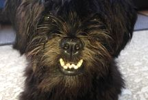 Moose-eh / Shih Tzu Why do people say I need braces???  / by Patti Weil