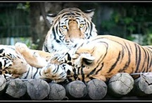 Animals / Just a few of the shots taken whilst visiting our local zoo and safari park here in Chiang Mai. / by Andrea Cross