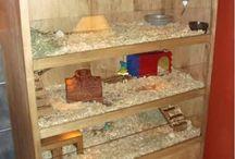 piggy house