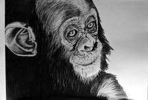 ENDANGERED / Graphite drawings and the start of a collection of Endangered animals.
