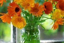 Flowers.Calendula