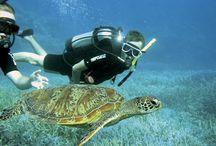 Sealife in the Whitsundays / Exploring the underwater world of the Whitsundays