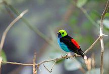 Beautiful Birds / Beautiful Birds