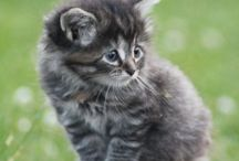 Megsimogatandó cicák