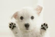 Pets / by Kristy Hockenberry Hammer