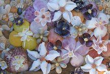 tas deniz kabugu