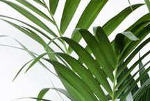 plants for the balkony