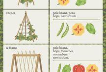 BEAUTIFUL GARDEN / Ideas for garden