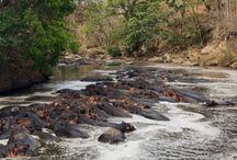 South Tanzania Africa Safari