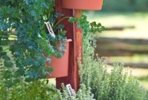 """Herb Gardening / My Garden Post is a great system for growing herbs.  The freshest ingredients from your """"garden"""" to your table."""